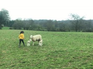 Curlew Country ¦ British Farming ¦ Farming Diaries ¦ Spring Lambs